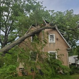 Tree Services - EMERGENCY STORM DAMAGE