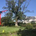 Tree Services - TREE PRUNING
